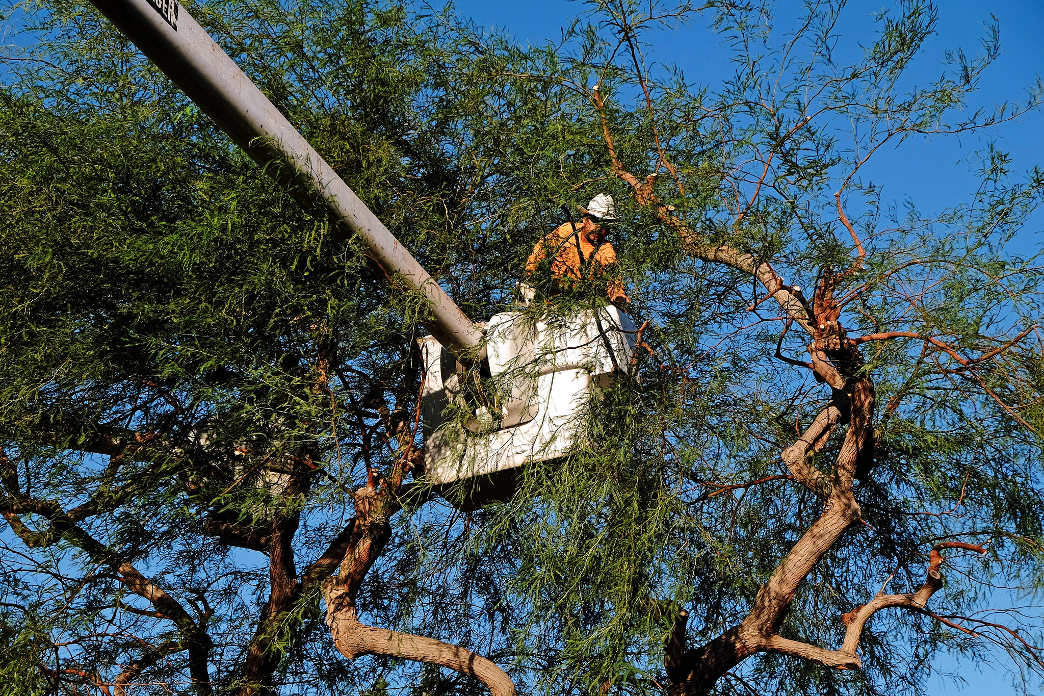 residential tree removal services in wellington