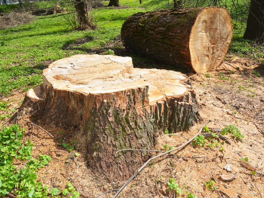 wellington tree removal services