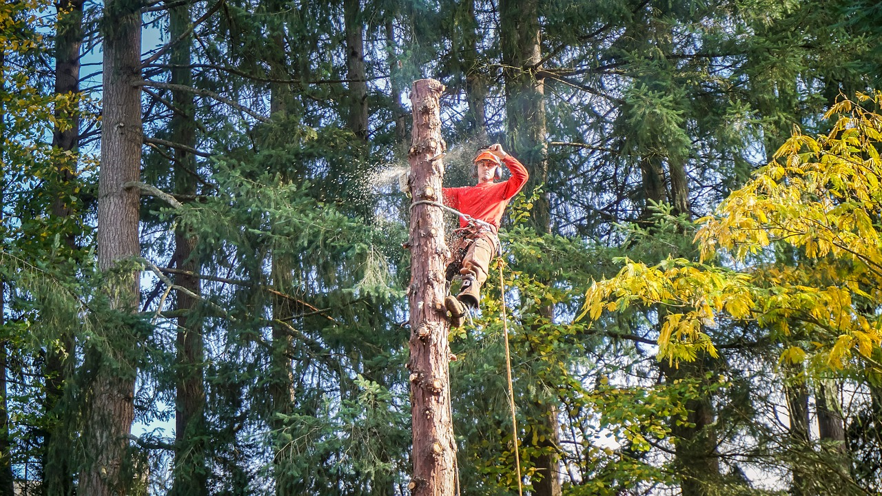 tree trimming services wellington florida