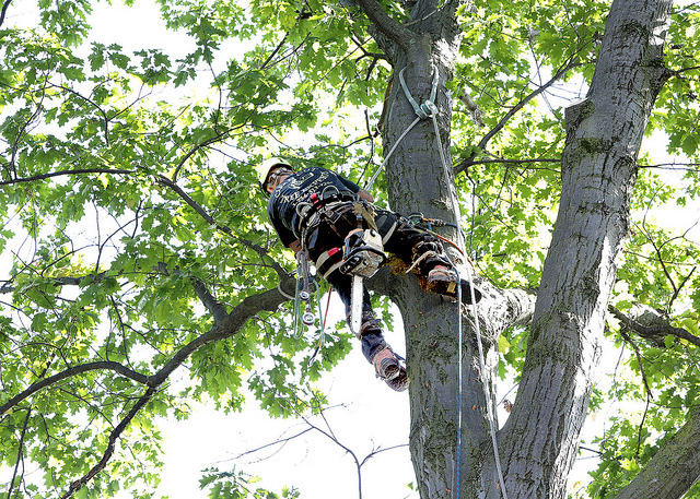 best tree removal services wellington florida