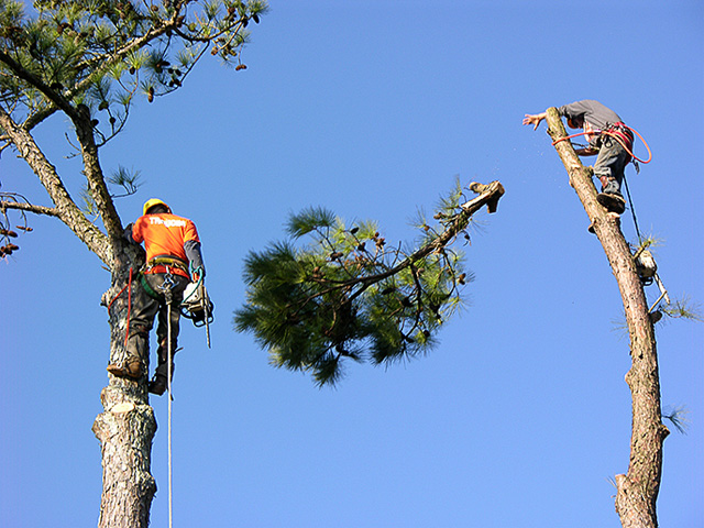 wellington best tree removal services