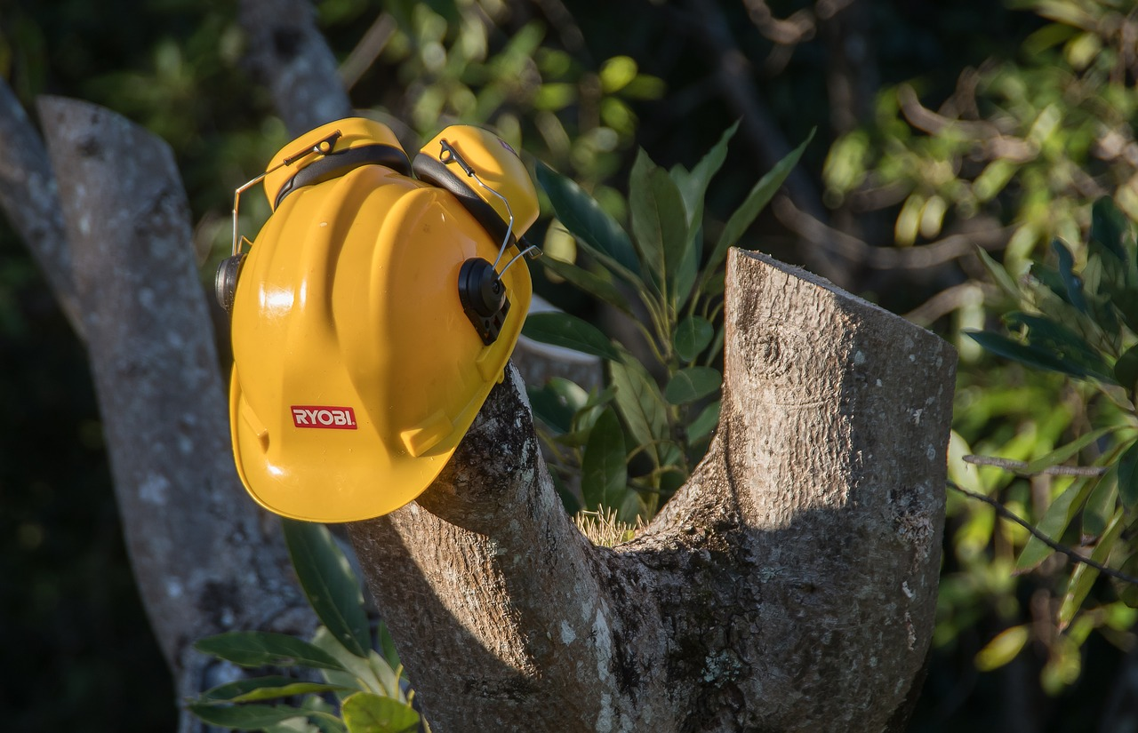 tree removal experts in Wellington FL