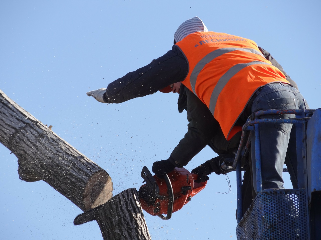 wellington emergency tree removal experts