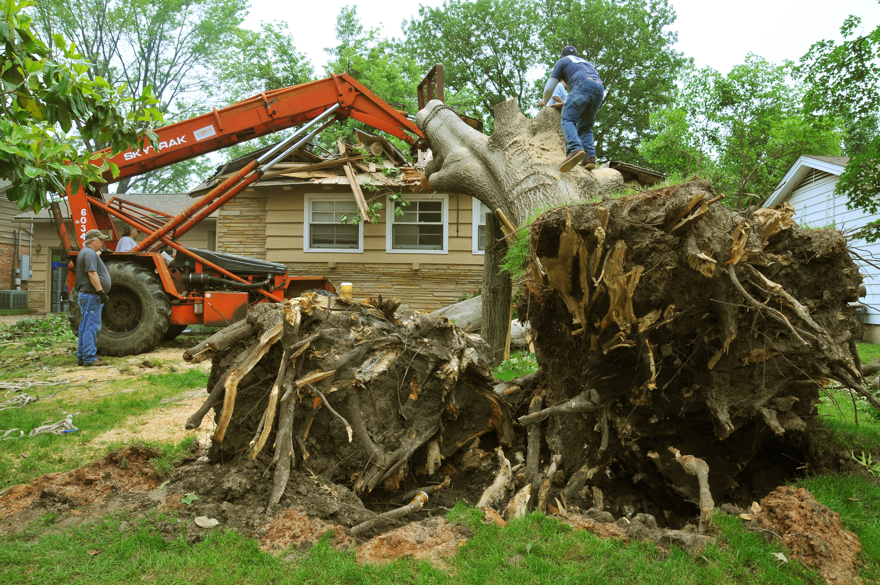 emergency tree services wellington florida